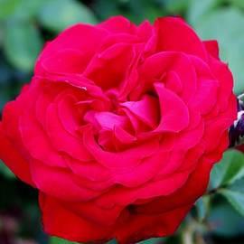 Cynthia Guinn - Red Love