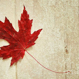 Isabel Poulin - Red maple leaf