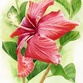 Sharon Freeman - Red Orange Hibiscus