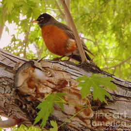 Bobbee Rickard - Red Red Robin