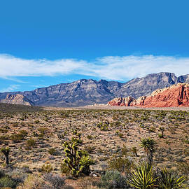 Carol  Lux Photography - Nevada Red Rock Canyon