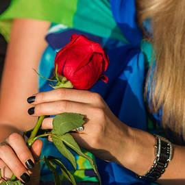 Alexander Senin - Red Rose - Featured 3