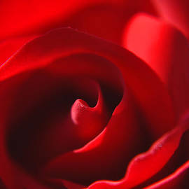 Roger Reeves  and Terrie Heslop - Red Rose