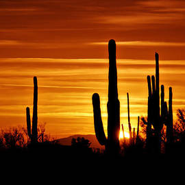 Saija  Lehtonen - Red Saguaro Sunset