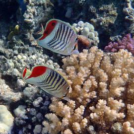 Red Sea Beauty 5