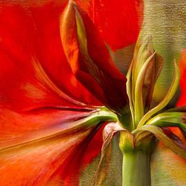 Marilyn Cornwell - Red Splendour
