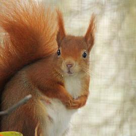 Martyn Bennett - Red Squirrel