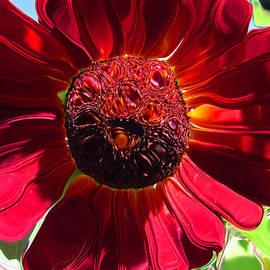Tina M Wenger - Red Sunflower Petals