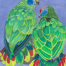 Red Tailed Amazon Parrots