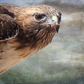 Barbara Manis - Red Tailed Hawk