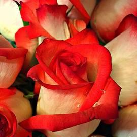 Nona Kumah - Red Tips