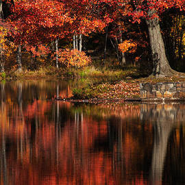 Karol Livote - Red Tree