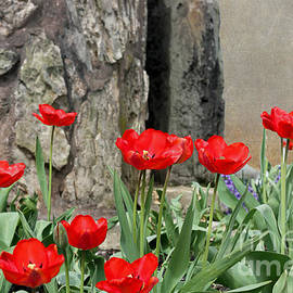 Terry Weaver - Red Tulips