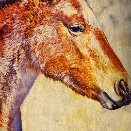 Charles Muhle - Red Willow pony  XXX