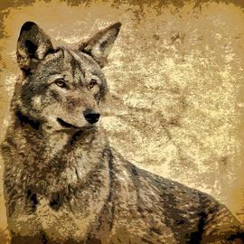 Athena Mckinzie - Red Wolf Stature
