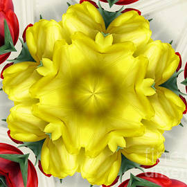 Rose Santuci-Sofranko - Red Yellow and White Tulips Kaleidoscope