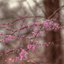 Lindley Johnson - Redbud Tree Branches