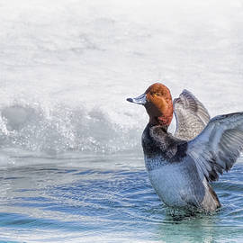 LeeAnn McLaneGoetz McLaneGoetzStudioLLCcom - Redhead Duck Bath