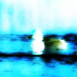 Travis Truelove - Redhead Duck - Bird