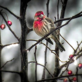 Karen Wiles - REDS of WINTER