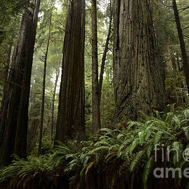 Bob Christopher - Redwood Grove