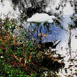Chuck  Hicks - Reflected Egret