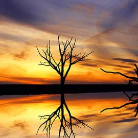 David Simons - Reflected Sunset