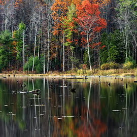 Christina Rollo - Reflecting Autumn