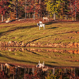 Michael Whitaker - Reflecting Horses In An Autumn Pond
