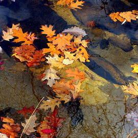 Marcia L Jones - Reflection