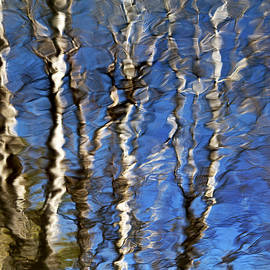 Christina Rollo - Reflection Of Aspen Trees Against Blue Sky