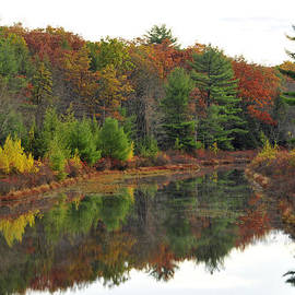 Dan Myers - Reflection Of Fall On Roaring Creek