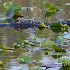 Carol McGunagle - Reflection of Gator