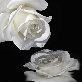 Jennie Marie Schell - Reflection of my Love White Rose
