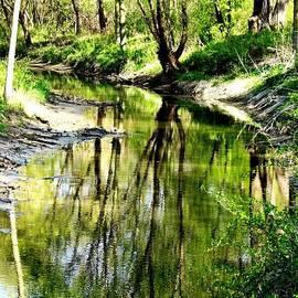 Karen  Majkrzak - Reflection of Tree in Creek