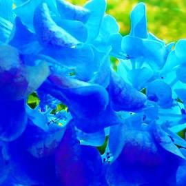 Eloise Schneider - Reflections of Blue
