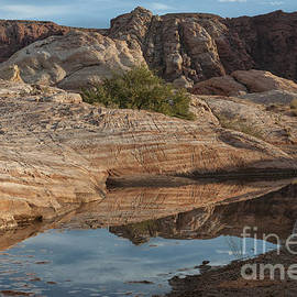 Sandra Bronstein - Reflections of Valley of Fire
