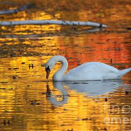 Jayne Carney - Reflections on Golden Pond