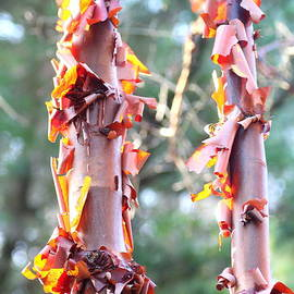 Rumyana Whitcher - Rejuvenating Tree