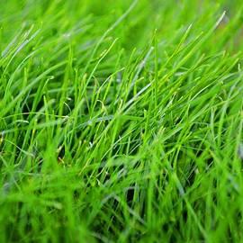 Waleed Sherif - Relaxing Grass