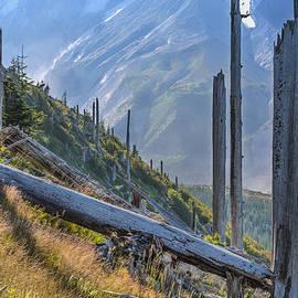 Dee Browning - Remnants of St. Helens eruption
