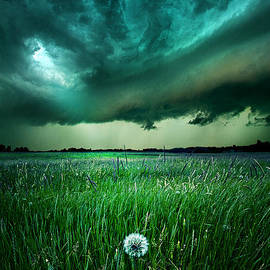 Phil Koch - Resolute