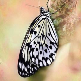 Sabrina L Ryan - Restful Butterfly