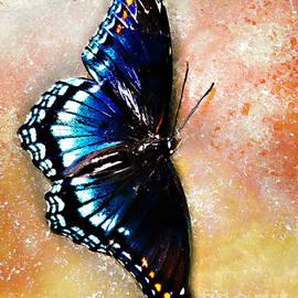 Nancy E Stein - Resting Butterfly