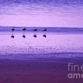 Michele Penner - Avocets Resting in the Sunset
