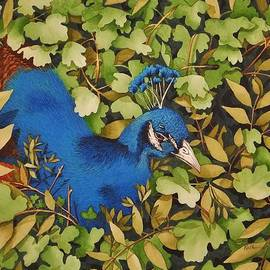 Katherine Young-Beck - Resting Peacock