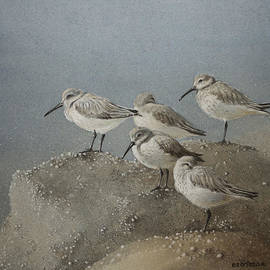 Ezartesa Art - Resting Sanderlings 1 Painting