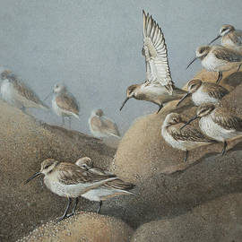 Ezartesa Art - Resting Sanderlings 2 Painting