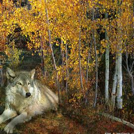 R christopher Vest - Resting Wolf In Aspens