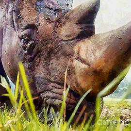 Elizabeth Coats - Rhinoceros